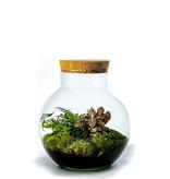 Growing Concepts Bolder Botanisch