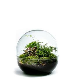 Growing Concepts Biodome Botanique