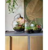 Growing Concepts Jar Large Calathea