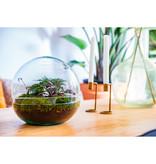 Growing Concepts Biodome Botanisch
