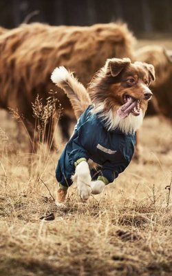 Vestiti del cane