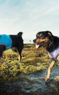 Raffreddamento per cani e umani