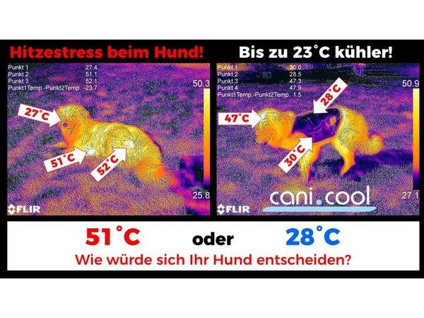 Leistungsfähige Kühlweste für Hunde, gemeinsam mit Tierärzten entwickelt