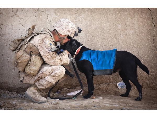 Il più potente giubbotto di raffreddamento per cani, sviluppato insieme ai veterinari - Copy