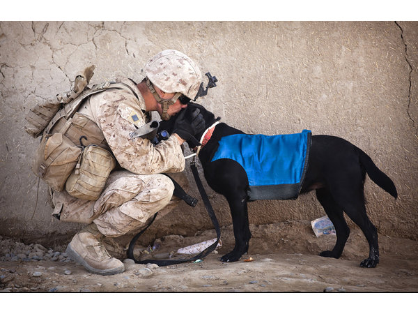 Le gilet rafraîchissant le plus puissant pour chiens, développé avec des vétérinaires - Copy