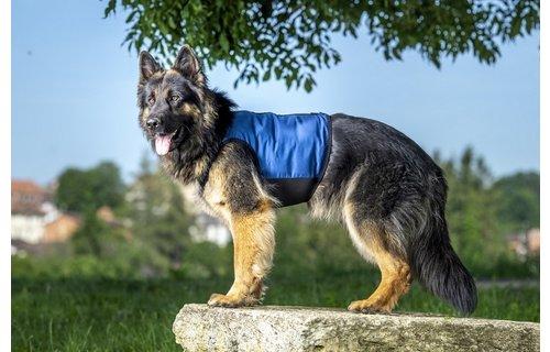 cani.cool Gilet de refroidissement sec pour chiens - Copy