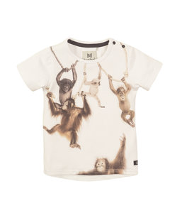T-shirt ss (38836) Koko Noko