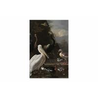 Een pelikaan en ander gevogelte bij een waterbassin • staande afdruk op plexiglas