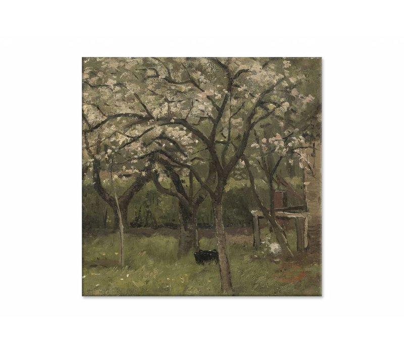 Bloeiende boom in boomgaard • vierkante afdruk op canvas