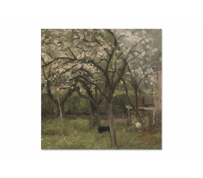 Bloeiende boom in boomgaard • vierkante afdruk op plexiglas