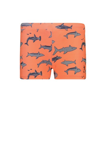 Shiwi Boy Swimboxer - Shark