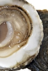 platte Zeewse oesters  6 st  natuur