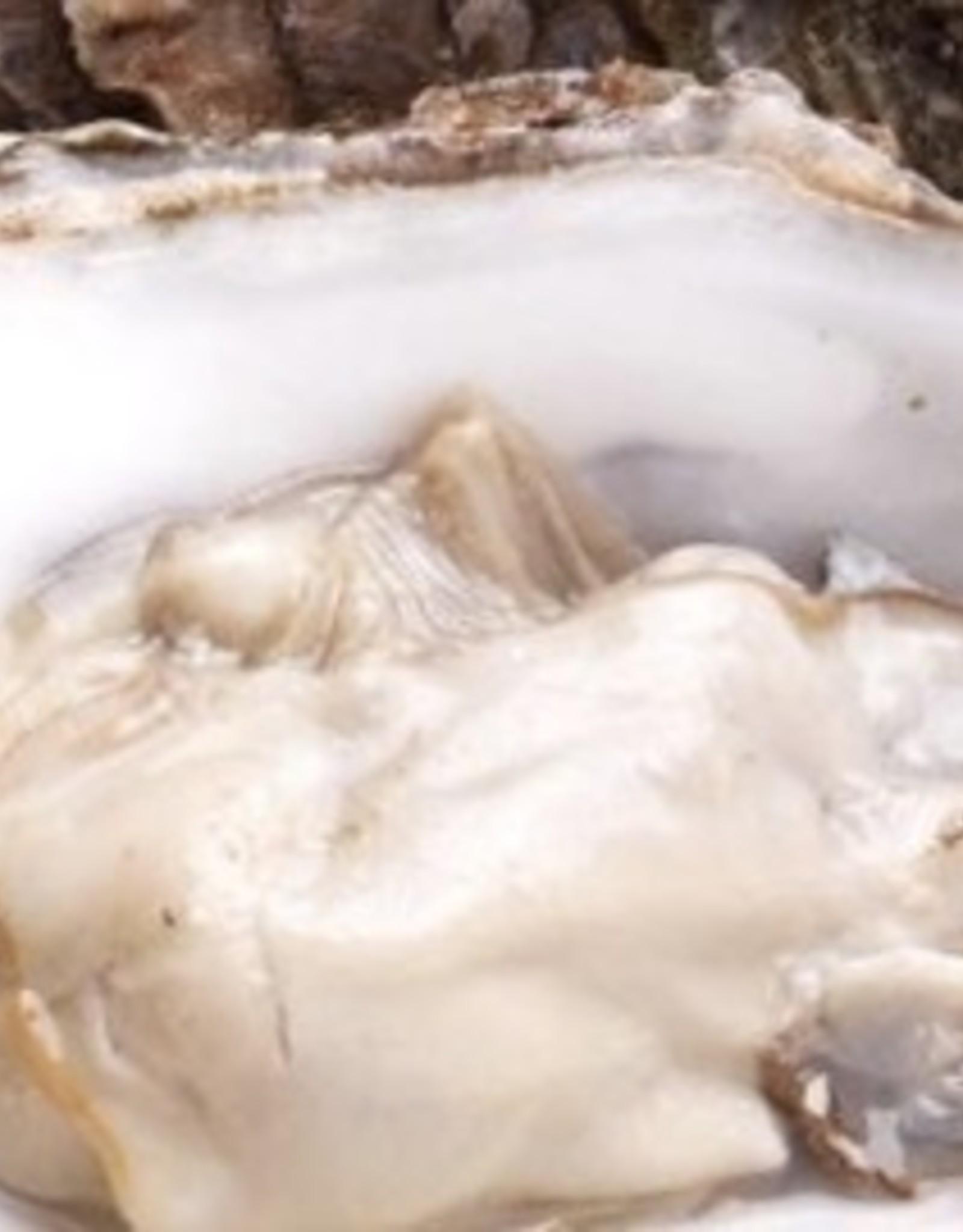 3 Creuse Zeeuwse oester Nr 2   Natuur