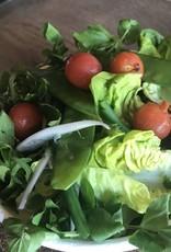 Groene salade en tomaat