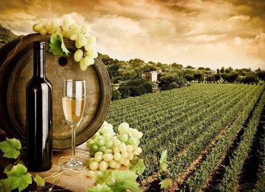 Weisswein/Champagne