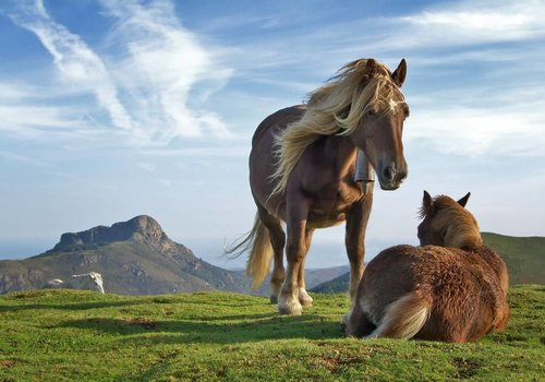 Oude paarden