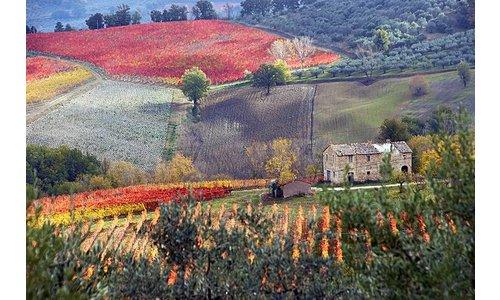 Wijn-Spijs Weekend Umbrië & Toscane