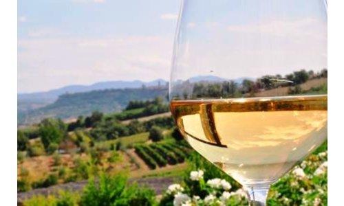 Witte wijn & rosé