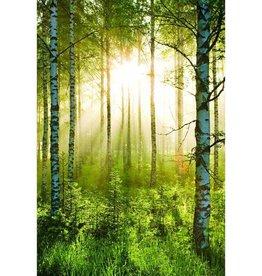 Forest Fotobehang 158 x 232 cm