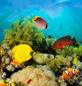 Fotobehang - Sea Corals - 366 x 127 cm- Multi