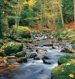 Fotobehang Forest Stream - 366 x 254 cm - Groen