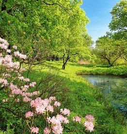 Fotobehang Park in the Spring 366x254 cm