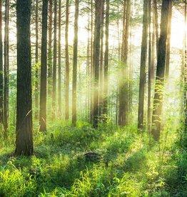 Fotobehang Fotobehang Sunset in the Woods 366x254 cm