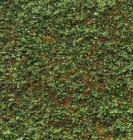 Fotobehang Fotobehang Ivy Wall 366 x 254cm