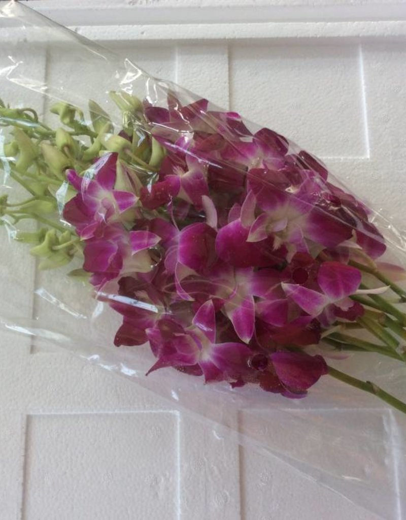 Orchids Purple 10 stem/ bunch