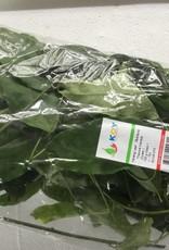 Yanang Leaf  (100gr.)