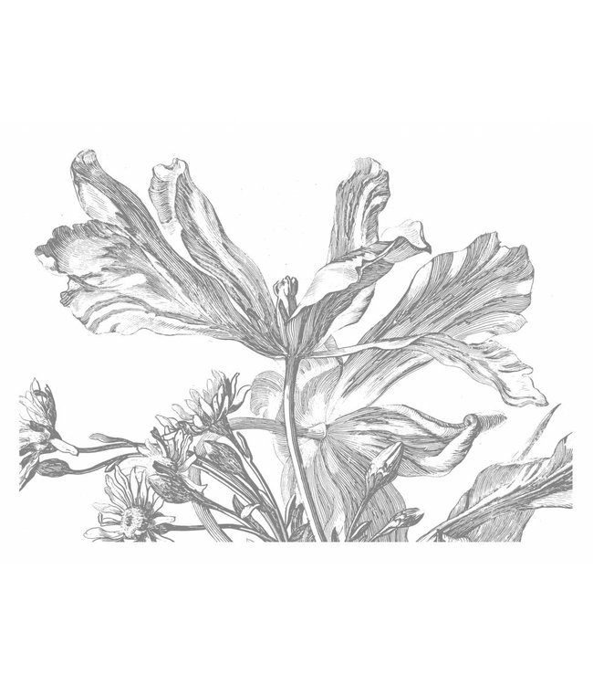Fototapete Engraved Flowers, 389.6 x 280 cm