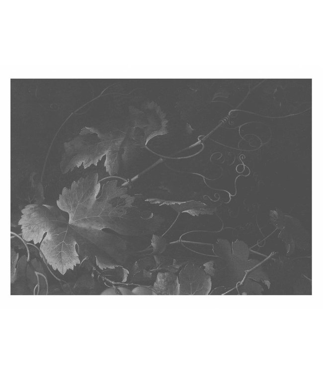 Fototapete Black & White Flowers, 389.6 x 280 cm