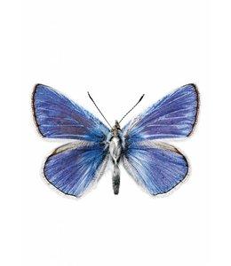 Hagedornhagen Butterfly 959
