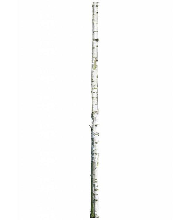 Wandtattoo Home Tree 2, 8 x 260 cm