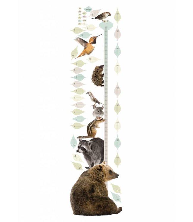 Wandtattoo Growth Chart 2, 40 x 150 cm