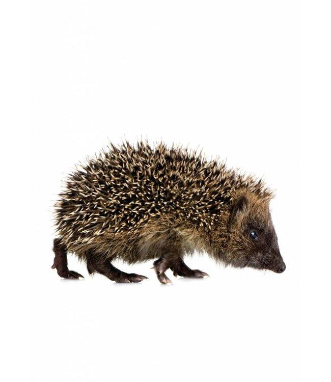 Wandtattoo Hedgehog, 17 x 10 cm