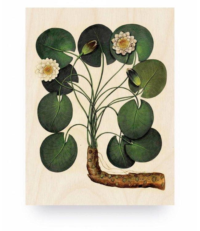 Holzbilder, Botanical Water Lily, S, 45 x 60 cm