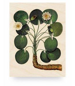 Botanical Water Lily, M