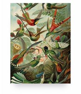 Exotic Birds, S