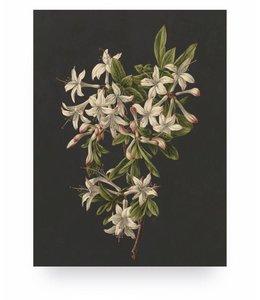 White Flowers 2, S