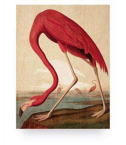 Flamingo, S
