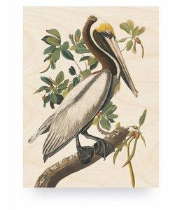 Pelican, M