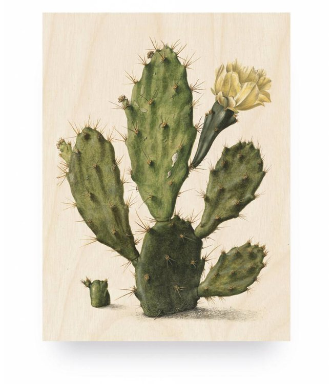 Holzbilder, Botanical Cactus, S, 45 x 60 cm