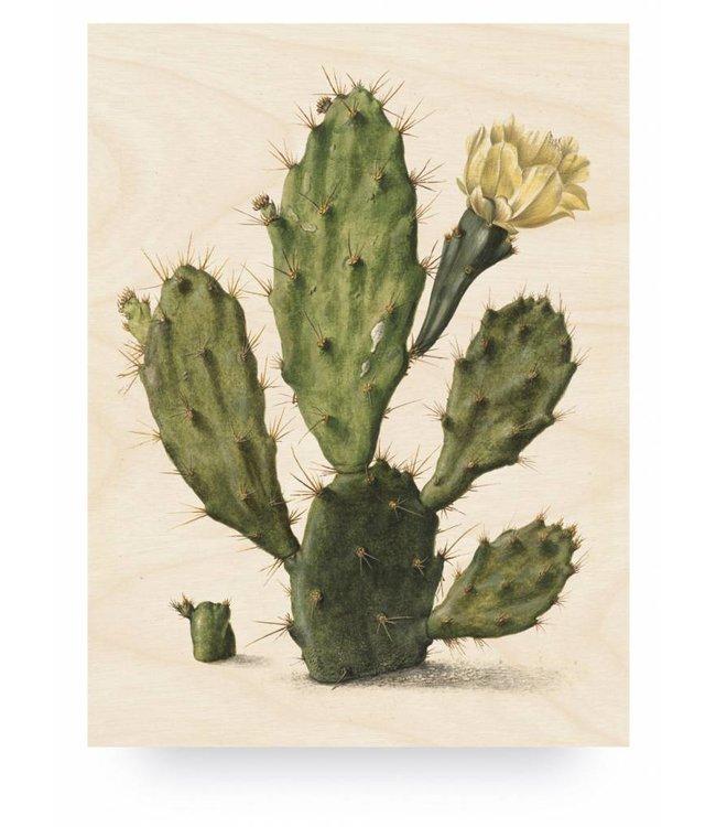 Holzbilder, Botanical Cactus, L, 75 x 100 cm