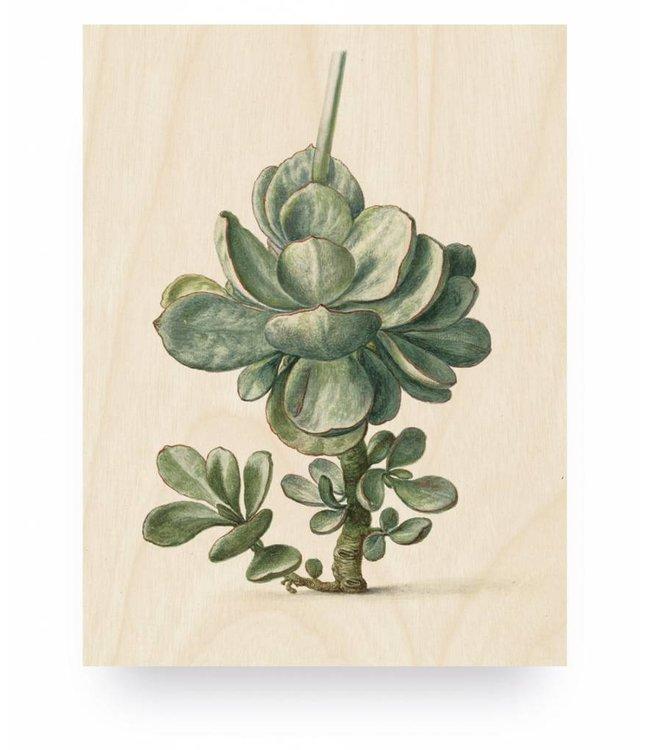 Holzbilder, Botanical Plant, S, 45 x 60 cm