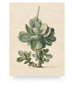 Botanical Plant, M