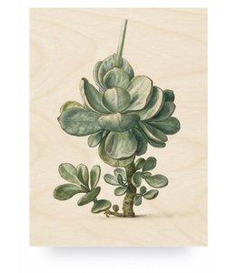 Botanical Plant, L