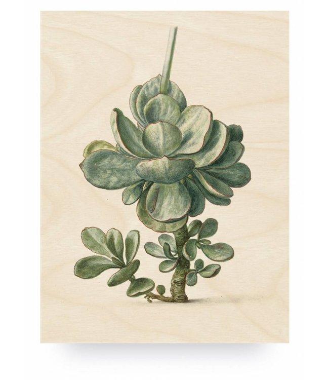 Holzbilder, Botanical Plant, L, 75 x 100 cm