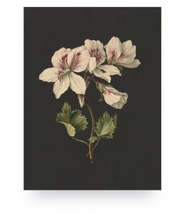 White Flowers 1, S