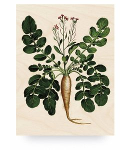 Botanical Root Plant, L